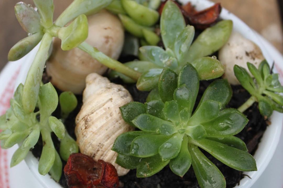 3littlespirals_living-art-succulents1